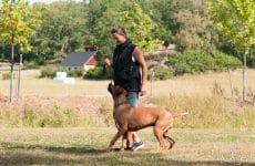 cb45501e835a Wayosis on the dog sports winners list 2018 - Kennel Wayosi